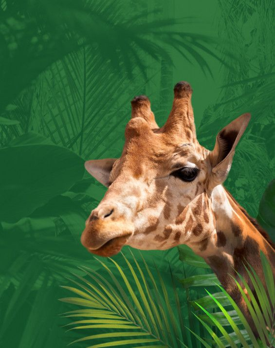 Vrije tijd Zoo Planckendael Webdesign, webdevelopment, e-mail automation