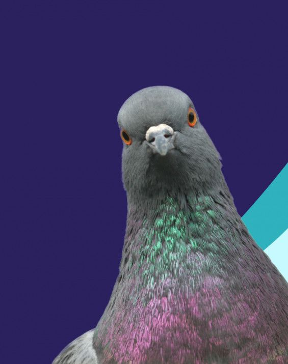 Retail & E-commerce Pigeon HP Webshop, Shopify